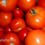 Хранение урожая томатов