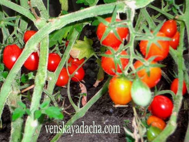 Сколько и каких овощей вырастить на даче