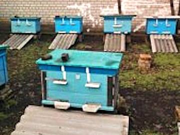 Подготовка к облету пчел