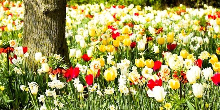 Цветники под плодовыми деревьями