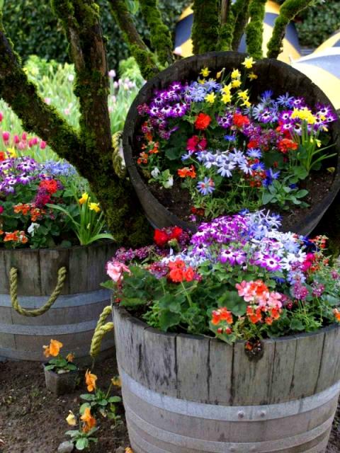 Цветник в контейнерах под кронами
