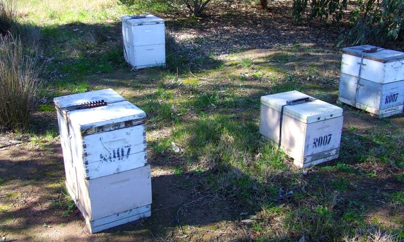 Расстановка пчелиных ульев