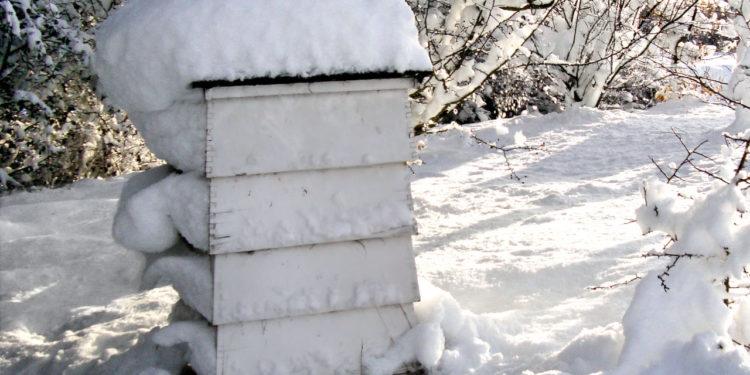 Улей в снегу