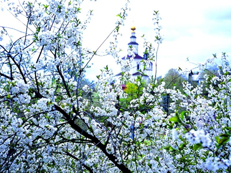 Монастырские вишневые сады