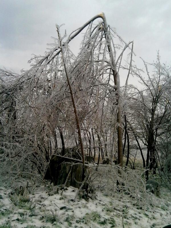 Дерево сломано в результате ледяного дождя
