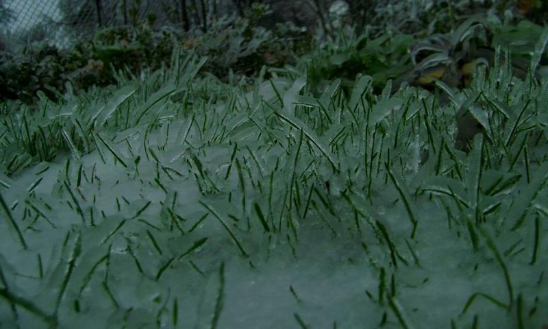 Ледяной дождь - растения
