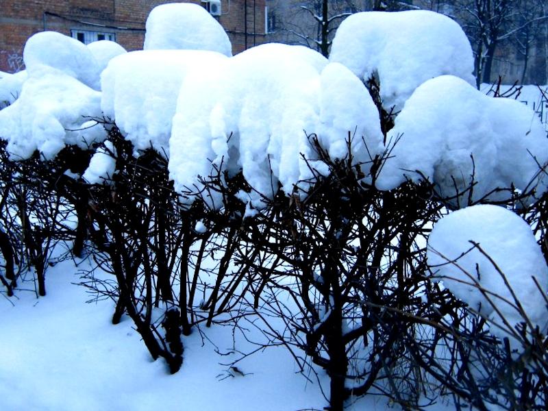 Сад после снегопада
