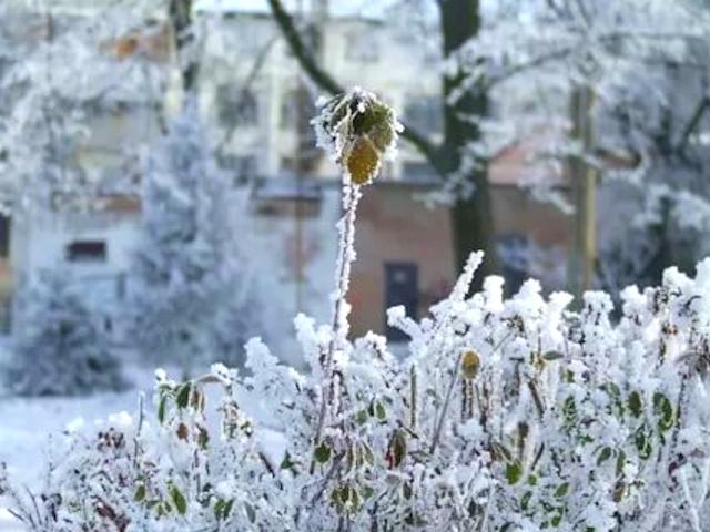 Снег и лед в саду