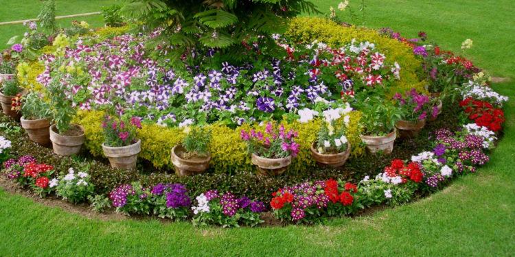 Цветы в приствольных кругах